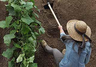 utiliser une binette pour le jardinage
