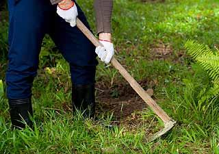 La binette est un outil de jardinage polyvalent
