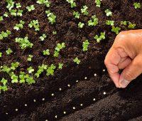 Semer les graines