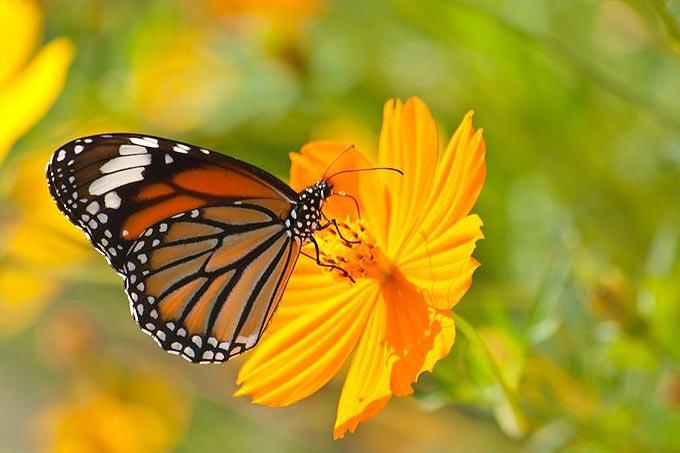 papillon se pose sur une fleur
