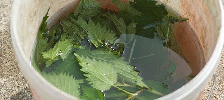 utiliser le purin de plantes