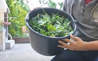 préparer son purin de plante