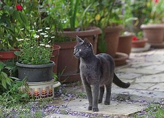 Chat qui visite le jardin