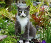 Comment repousser les chats du jardin ?