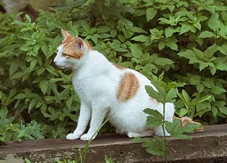 Chat attiré par le jardin potager