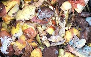 Les déchets de cuisine