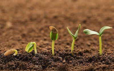 enrichir la terre du potager