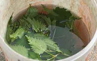 Les extraits végétaux