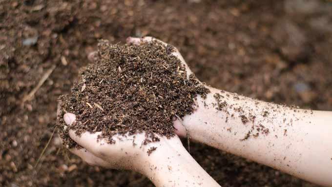 Nourrir le sol du potager