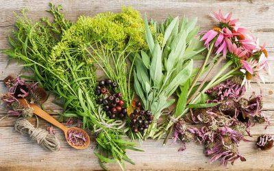 plantes médicinales à cultiver au potager