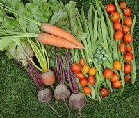 augmenter vos récoltes au potager