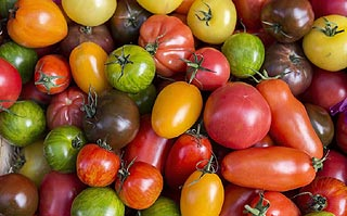 Bienfaits des tomates