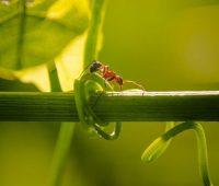 Les fourmis au potager