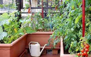 Choix de légumes adaptés au potager terrasse.