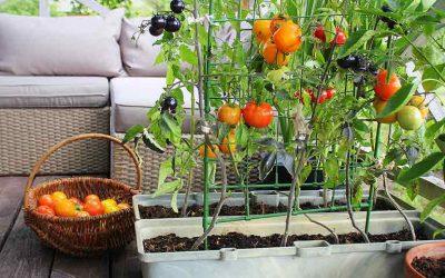 potager balcon ou terrasse