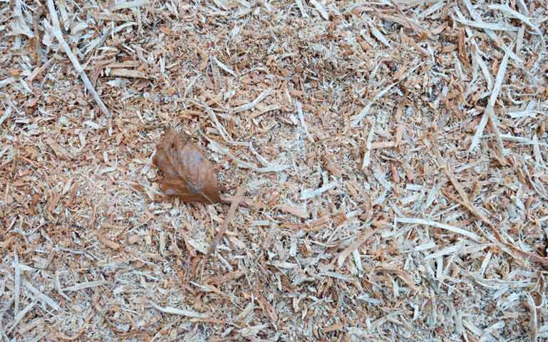 Au potager en décembre, protégez votre sol.