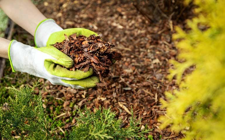 Au potager en novembre, préparez et fertilisez la terre.