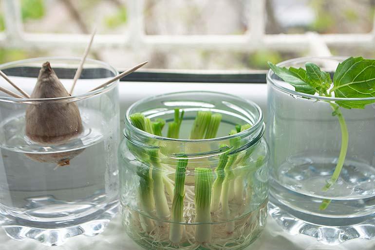 Faites pousser vos légumes à la maison !