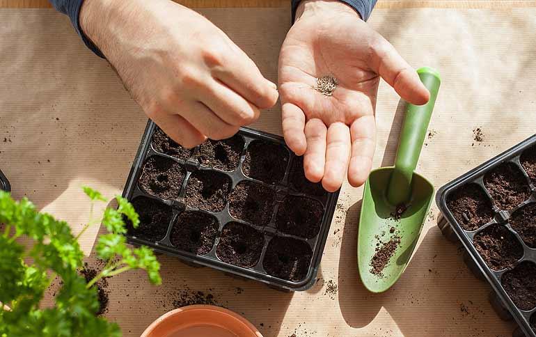 Potager d'intérieur, préparation des semis